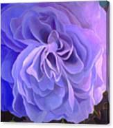 Begonia Bloom Canvas Print