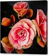 Begonia In Pink Canvas Print