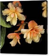 Begonias 2 Canvas Print