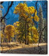 Behind The Branches Canvas Print