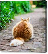 Behind The Cat Canvas Print