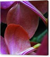 Behind The Orchids Canvas Print