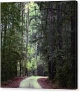 Beidler Forest Canvas Print
