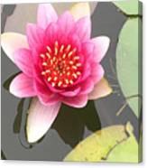 Beijing Lotus Canvas Print