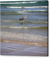 Being One With The Gulf - Alert Canvas Print