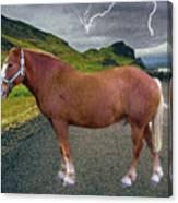 Belgian Horse Canvas Print