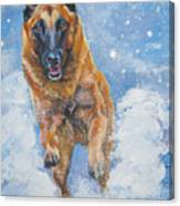 Belgian Malinois In Snow Canvas Print