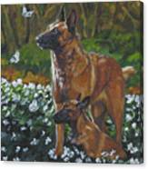 Belgian Malinois With Pup Canvas Print