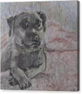 Bella In Pencil Canvas Print