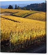 Bella Vida Vineyard 3 Canvas Print