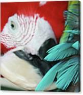 belle Ara Macao oiseaux tropicaux de Maui  Canvas Print
