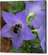 Bellflower And Bee  Canvas Print