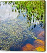 Below The Surface Canvas Print