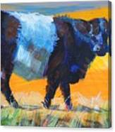 Belted Galloway Cow Side View Canvas Print