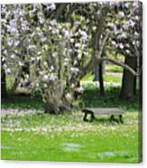 Bench Among Magnolia Canvas Print