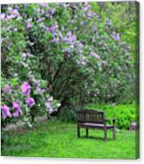 Bench In Lillacs Canvas Print