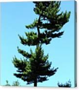 Beneath This Tree Lies Robert Edwin Peary Canvas Print