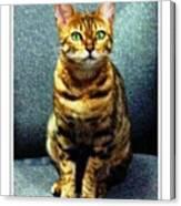 Bengal Cat Digital Oil Pastel Canvas Print