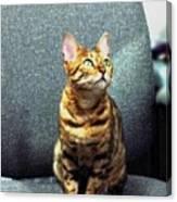 Bengal Cat Oil Pastel  Canvas Print
