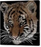 Bengal Tiger Cub Canvas Print