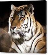 Bengal Tiger Sitting In Silent Shadows Canvas Print
