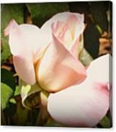 Benicia Pink 2 Canvas Print