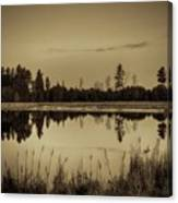 Bentley Pond Pines In Sepia Canvas Print