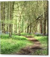 Bentley Woods, Warwickshire #landscape Canvas Print