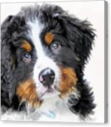 Berner-sennenhund Canvas Print
