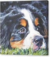 Bernese Mountain Dog In Grass Canvas Print