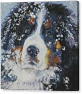 Bernese Mountain Dog Puppy Canvas Print