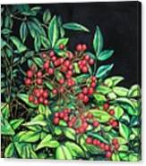 Berries - Pyracantha Canvas Print