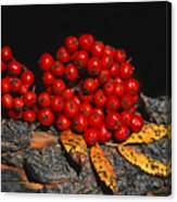 Berries And Bark Canvas Print