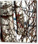 Berries And Birches Canvas Print