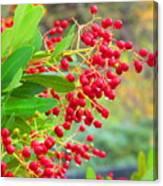 Berries Macro Canvas Print