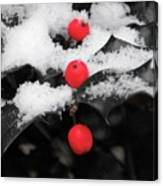 Berries In Snow Canvas Print