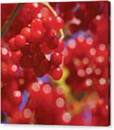 Berry Berry Red-2 Canvas Print