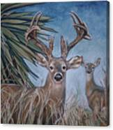 Berry Buck And Doe Canvas Print