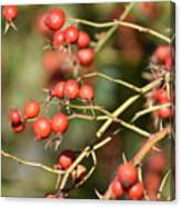 Berry Christmas  Canvas Print