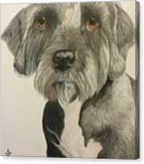 Bert Canvas Print