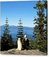 Best Buddies At Lake Tahoe Canvas Print