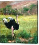 Best Legs In Ngoro Canvas Print