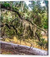 Bethany Cemetery Oaks And Tidal Creek Canvas Print