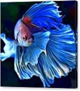 Betta fish 1 portrait digital art by scott wallace for Betta fish mirror