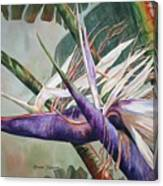 Betty's Bird - Bird Of Paradise Canvas Print