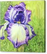 Betty's Iris Canvas Print