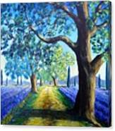 Between The Lavender Fields Canvas Print