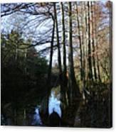 Between Trees Canvas Print