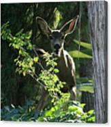 Beverly Hills Deer Canvas Print