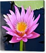 Beyond Beautiful Water Lily 2 Canvas Print